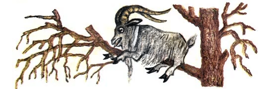 Храбрый баран