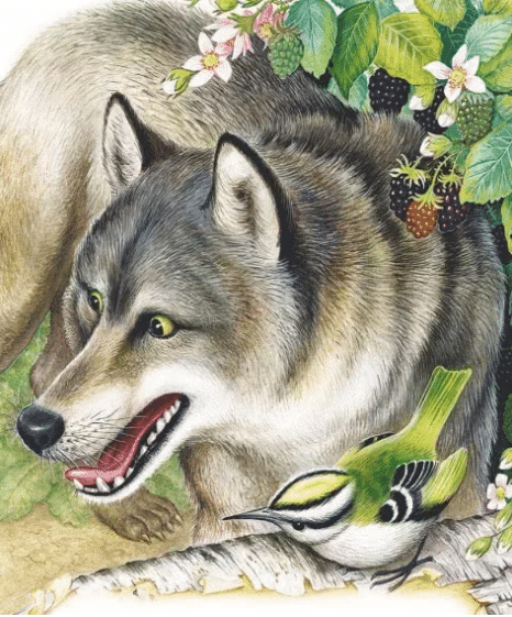 Лесной колобок-колючий бок