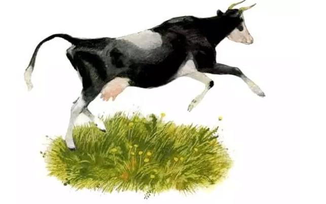 Бодливая корова